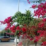 Город Манавгат,улочки, цветы