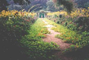 Nasturtiums-at-Giverny