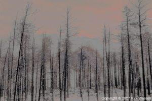 031408_kirk-wassell3-artwork