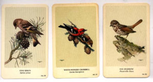 fenwick-landsdowne-bird-cards