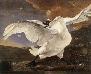 Jan-Asselijn_Threatened-Swan_1650