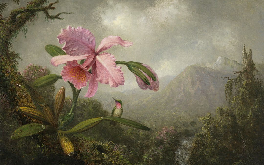 Marc Handelman on Martin Johnson Heade