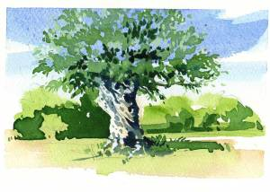 Ancient olive tree - Painting vacation in the South of France