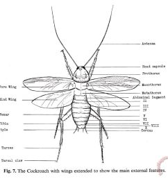 images of cockroach diagram [ 960 x 897 Pixel ]