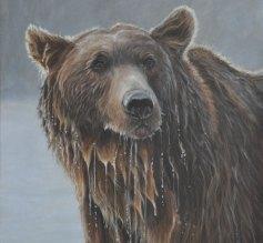 c384c-grizzly-portrait-for-web