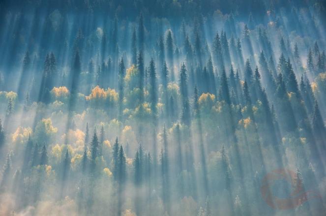 Фотограф Вадим Балакин, лес