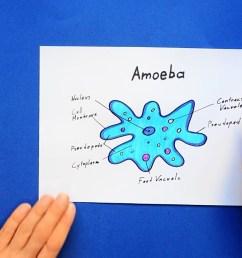 1280x720 how to draw amoeba amoeba drawing [ 1280 x 720 Pixel ]