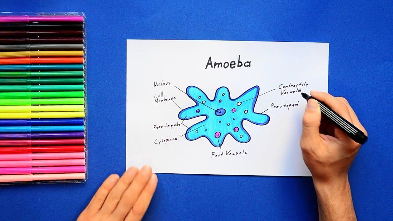 hight resolution of 1280x720 how to draw amoeba amoeba drawing