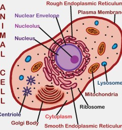 1164x1164 drawing of animal cell animal cell drawing labeled the diagram animal cell drawing [ 1164 x 1164 Pixel ]