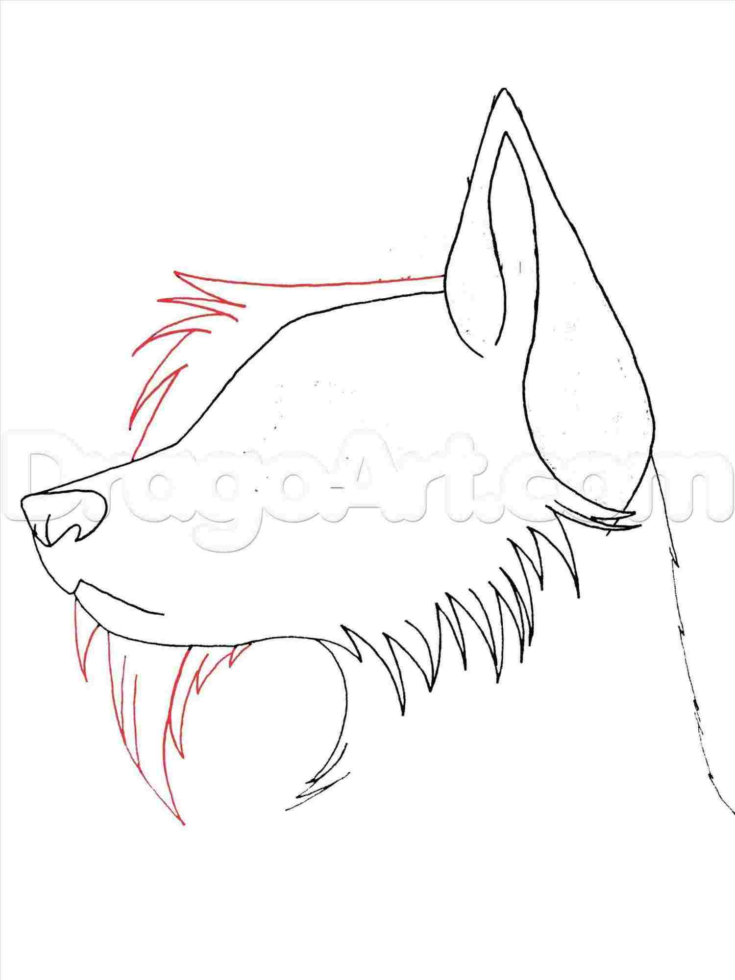 Draw Anime Wolf Drawing Tutorial Easy