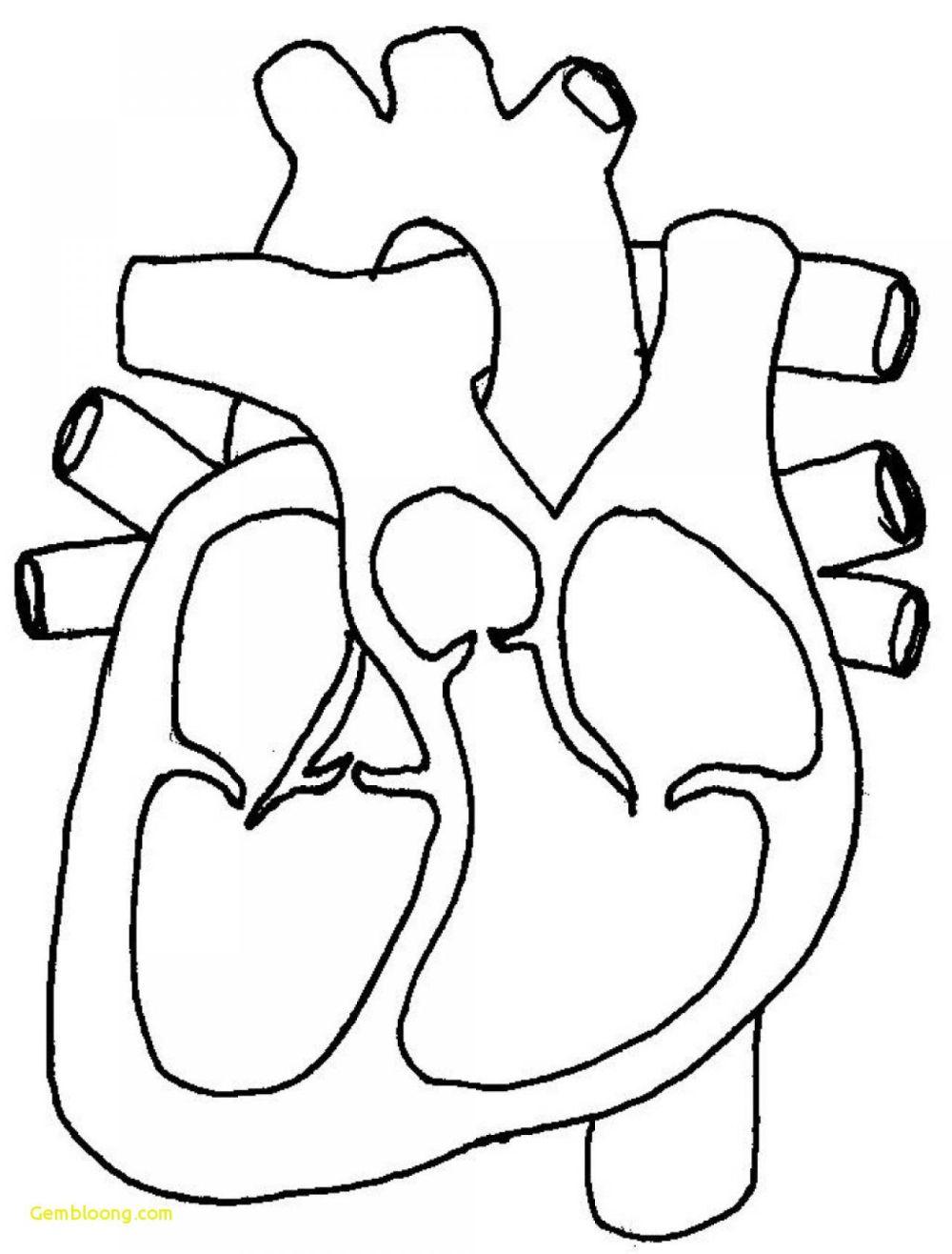 medium resolution of 1280x1685 blank human body diagram human anatomy drawing human body blank drawing of human body