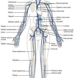 1579x2401 blank human body diagram new nervous system drawing at getdrawings blank drawing of human [ 1579 x 2401 Pixel ]