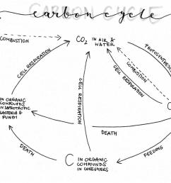 2493x1478 group biology people how does your carbon cycle diagram look carbon cycle drawing [ 2493 x 1478 Pixel ]