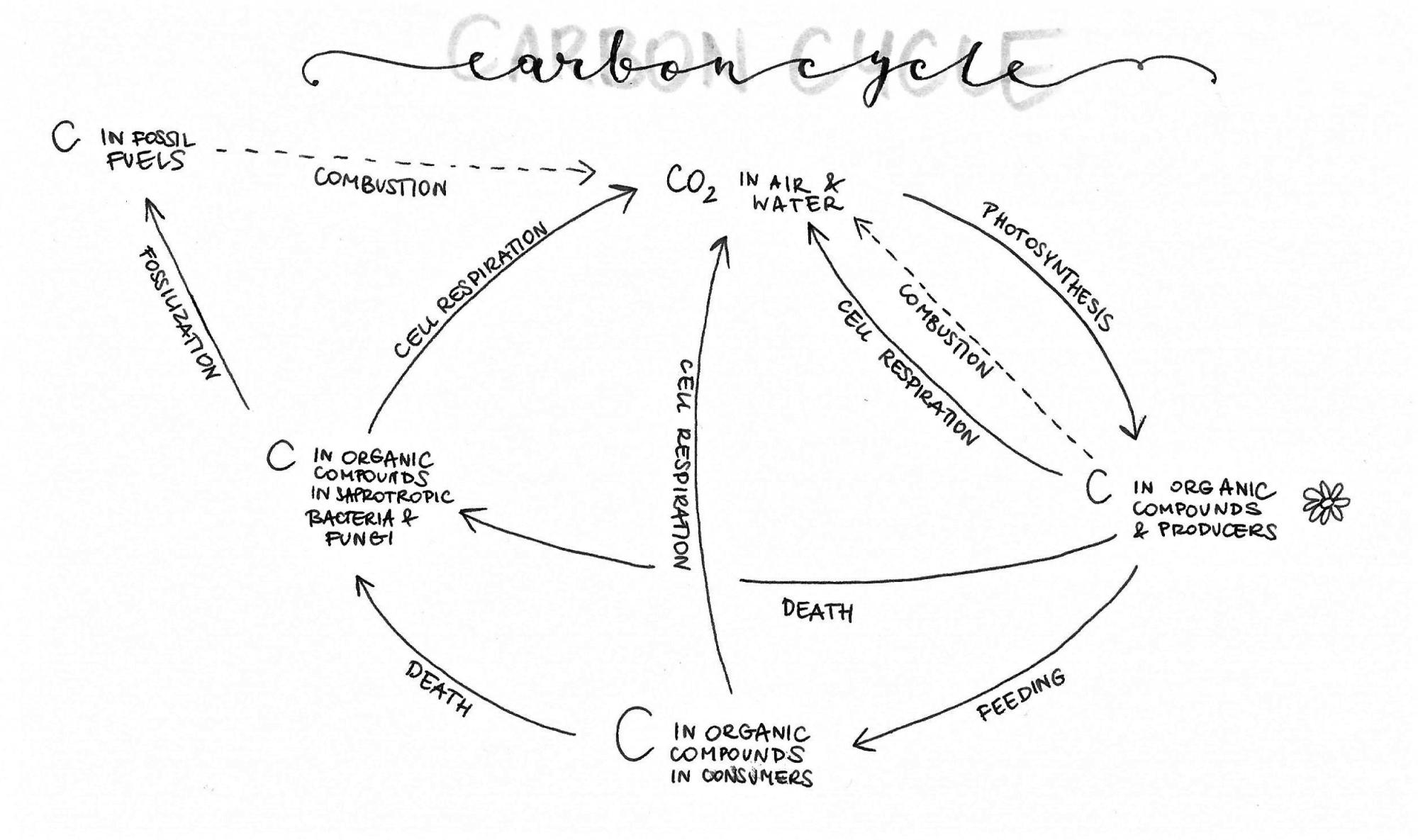 hight resolution of 2493x1478 group biology people how does your carbon cycle diagram look carbon cycle drawing