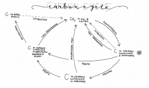 small resolution of 2493x1478 group biology people how does your carbon cycle diagram look carbon cycle drawing