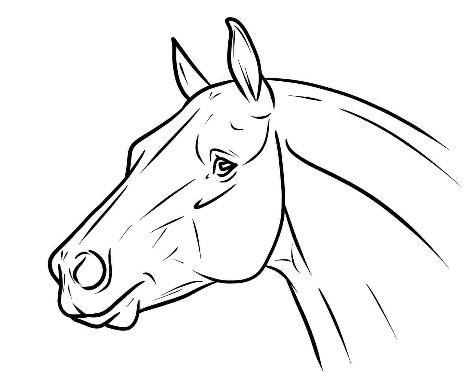 Horse Head Line Drawing ~ Drawing Tutorial Easy