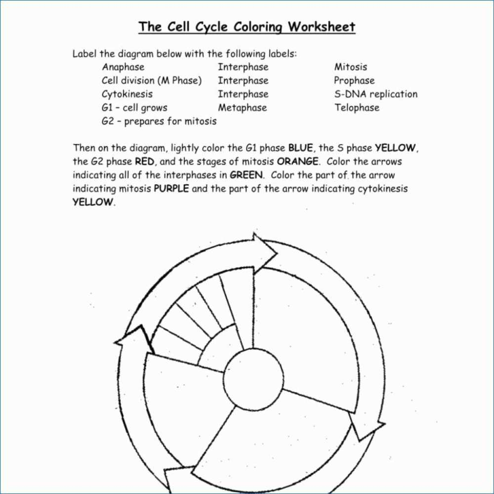 medium resolution of 1024x1024 dna the double helix coloring worksheet answers best of dna cell cycle drawing