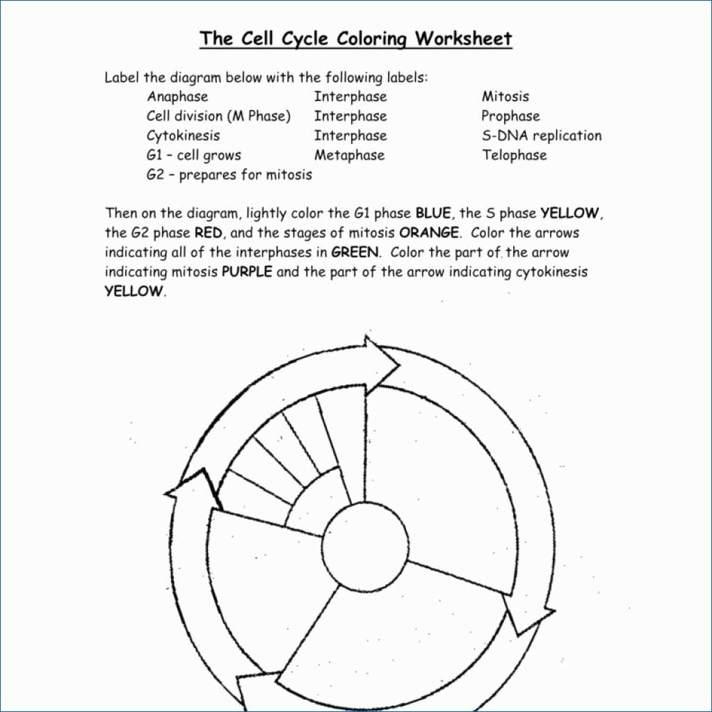 hight resolution of 1024x1024 dna the double helix coloring worksheet answers best of dna cell cycle drawing