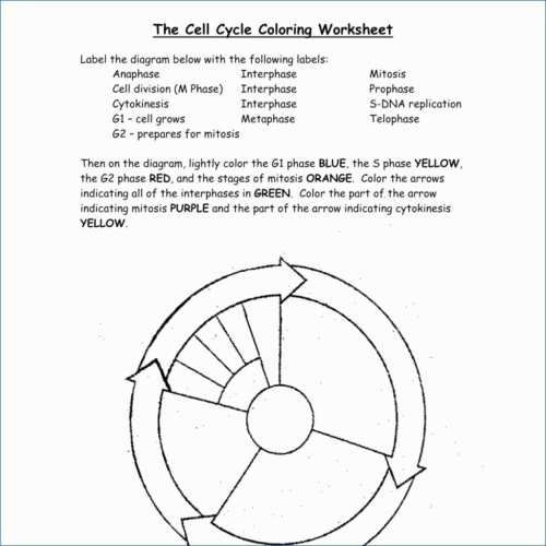small resolution of 1024x1024 dna the double helix coloring worksheet answers best of dna cell cycle drawing