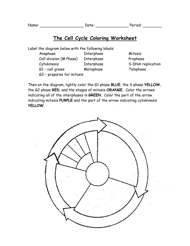 hight resolution of 791x1024 the cell cycle coloring worksheet questions answers cell division drawing