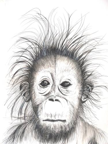 chimpanzee drawing at paintingvalley