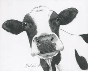 cow drawing sketch dairy holstein drawings highland pencil sketches charcoal paintingvalley drawn giclee easy face cows calf decor animal painting