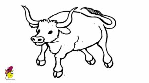 bull drawing cow bulls easy drawings draw chicago sketch taurus simple line clipart getdrawings paintingvalley realistic steps