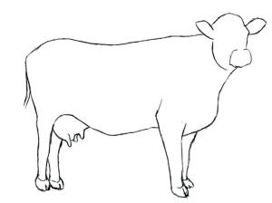 cow drawing simple easy drawings cattle coloring paintingvalley pages colouring