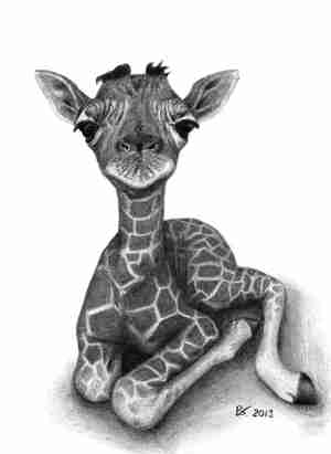 giraffe drawing animals drawings realistic animal giraffes adorable draw sketches vugs barbara babies sleeping dog tattoo paintingvalley painting fine funny
