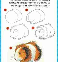 980x1386 make a cute embroidery rhcom how to draw guinea pig art cute guinea pig [ 980 x 1386 Pixel ]