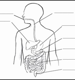 1151x945 gi system diagram lovely human digestive system drawing digestive system drawing [ 1151 x 945 Pixel ]
