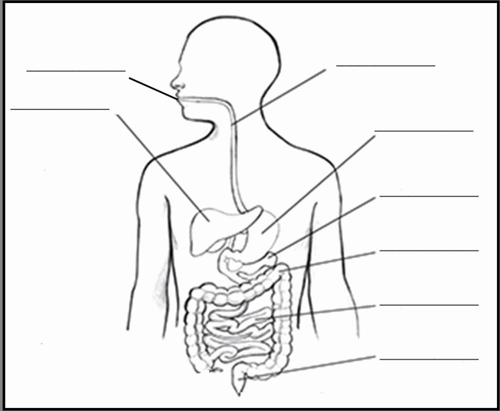 medium resolution of 1151x945 gi system diagram lovely human digestive system drawing digestive system drawing