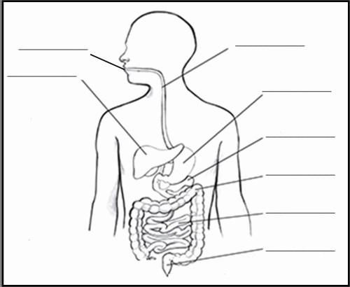 small resolution of 1151x945 gi system diagram lovely human digestive system drawing digestive system drawing