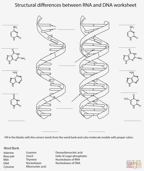 small resolution of 1323x1571 label dna diagram wiring diagrams dna drawing labeled
