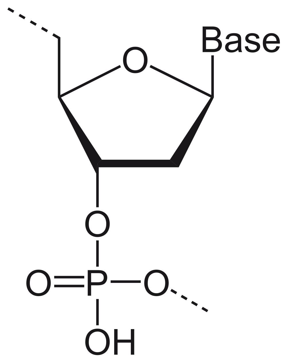 medium resolution of 2000x2528 dna drawing drawing labeled for free download dna drawing labeled