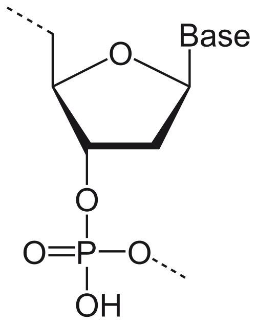 small resolution of 2000x2528 dna drawing drawing labeled for free download dna drawing labeled