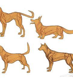 975x819 dog anatomy dog anatomy drawing [ 975 x 819 Pixel ]