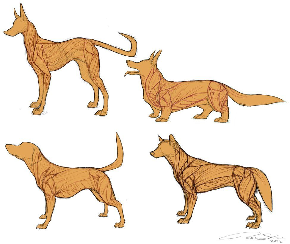 medium resolution of 975x819 dog anatomy dog anatomy drawing
