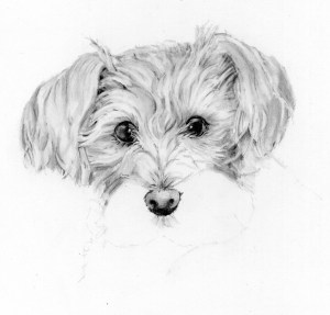 dog pencil easy drawing drawings sketches draw paintingvalley