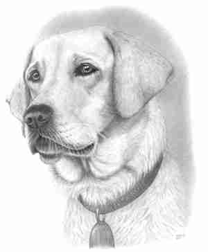 dog drawing dogs drawings pencil easy sketch sketches draw pretty simple face portrait cats labrador cliparts paper realistic animals lab