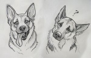 dog pencil easy drawing sketches drawings paintingvalley