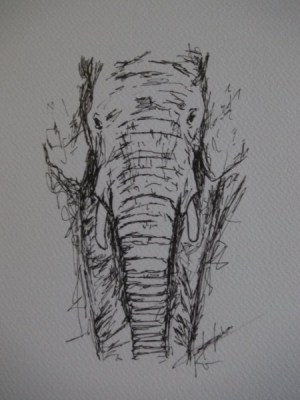 pen drawings drawing elephant easy sketches sketch animal animals elephants pencil draw wall ink explore paintingvalley doodle simple dessin gift