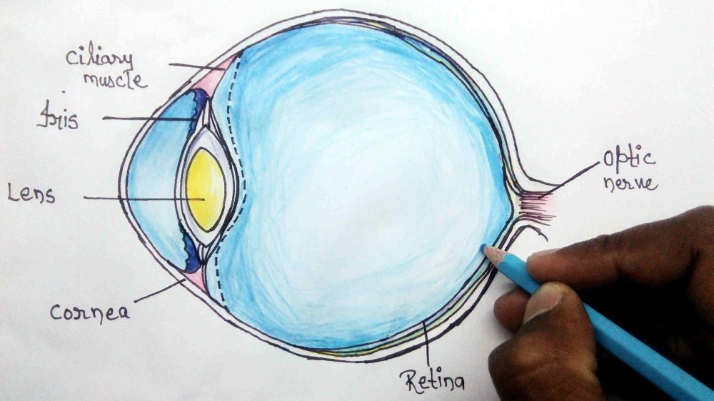 medium resolution of 1280x720 how to structure of human eye step eye anatomy drawing