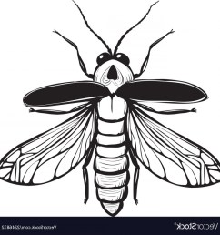 1200x1225 firefly drawing firefly insect drawing [ 1200 x 1225 Pixel ]