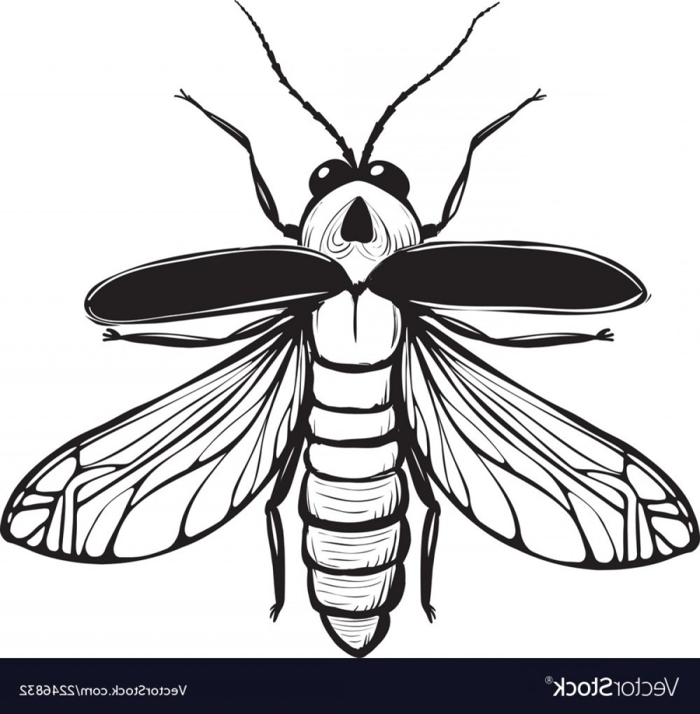 medium resolution of 1200x1225 firefly drawing firefly insect drawing