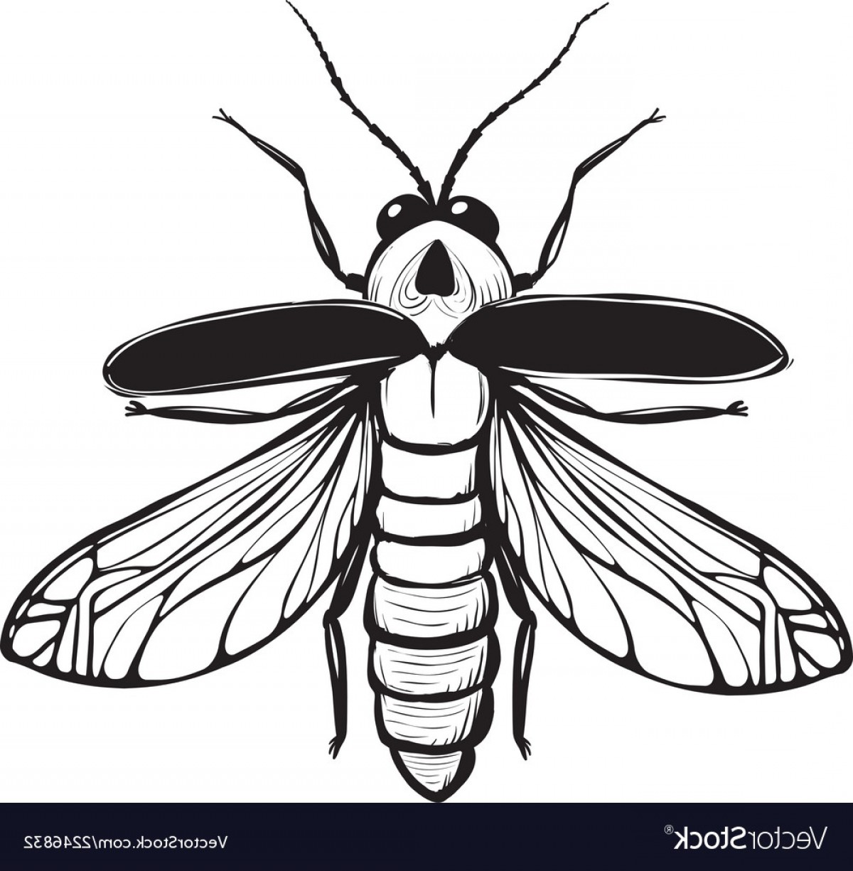hight resolution of 1200x1225 firefly drawing firefly insect drawing