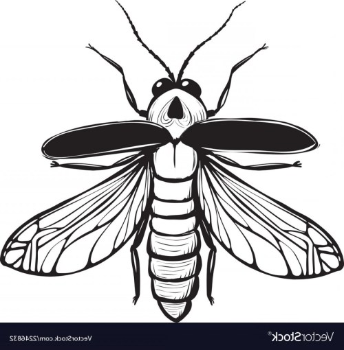 small resolution of 1200x1225 firefly drawing firefly insect drawing