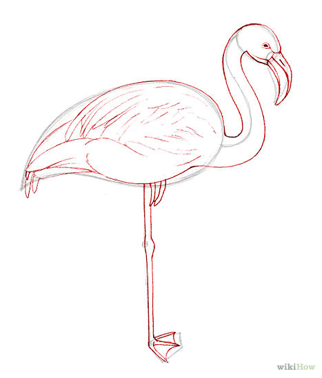flamingo drawing outline at