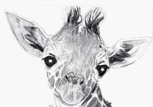 giraffe drawing face pencil easy drawings tutorial paintingvalley explore