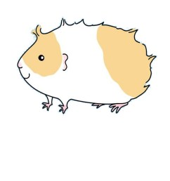 guinea pig drawing [ 833 x 1000 Pixel ]